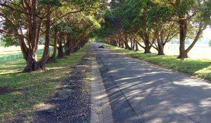 Yaralla Driveway