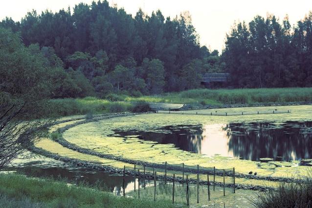 History of Homebush Bay