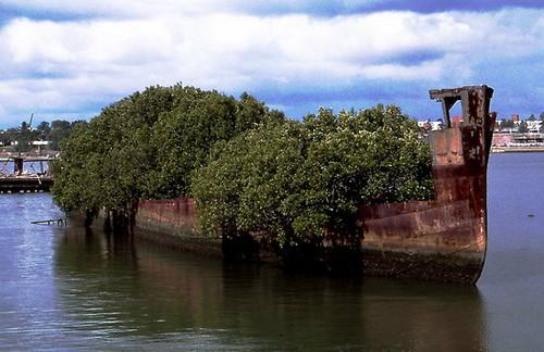 Shipwrecks of Homebush Bay